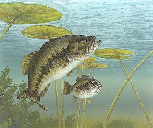 Bass fishing fisherman advisor for Bass fishing pictures