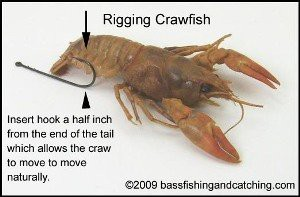 How to rig a crawfish